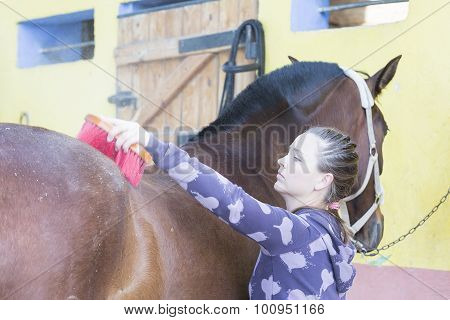 Girl Grooming A Horse.