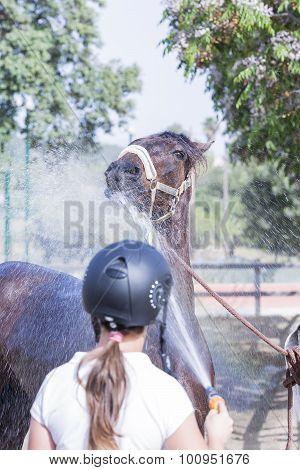 Girl Refreshing Horse