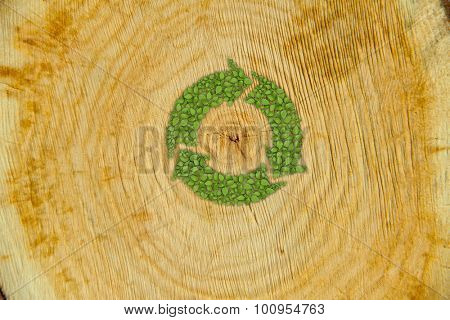 Cross section of tree trunk with green plant sprout recycle symbol