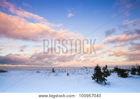 Winter Coastal Landscape With Small Pine Trees