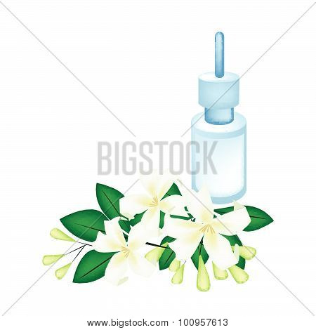 Essential Oil With Orange Jessamine Or Mock Orange Flowers