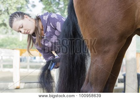 Young Woman Grooming A Horse.