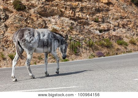Donkey Walks Along Road In The Mountains