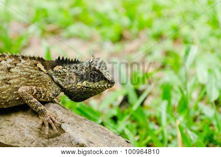 Green Dragon Is Reptile  In Forest