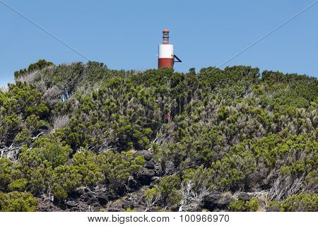 Natural Heather Forest And Lighthouse Landscape In Sao Jorge. Azores