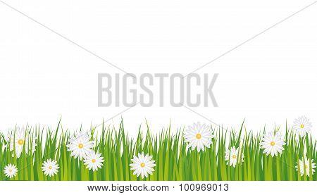 Background Daisies