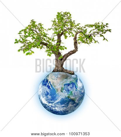 Glowing Earth and bonsai isolated on white