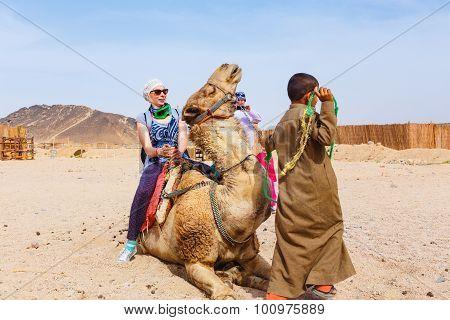 Arab Boy Rolls Tourists On A Camel.