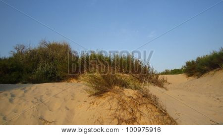 Sand Dunes And Withered Grass