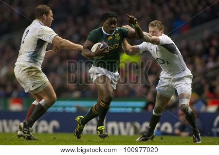 TWICKENHAM LONDON, 27 NOVEMBER 2010. South Africa's Lwazi Mvovo, evades the tackle of England's Dylan Hartley, and Chris Ashton during the Investec International match between England and South Africa