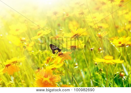 Beautiful butterfly on cosmos flower