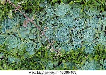 texture green flowers