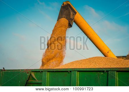 Harvester Loading Grain On A Green Container
