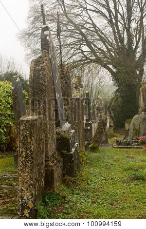 Ivy, lichen and moss growing on medieval tombstones in France