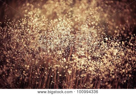 Field grass