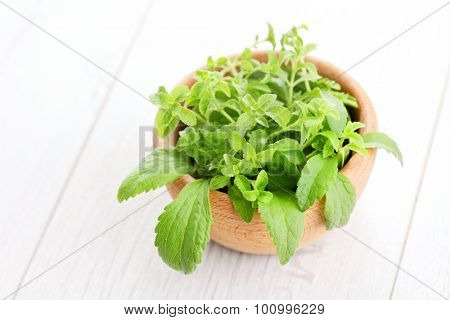 fresh stevia natural sugar - herbs and spices