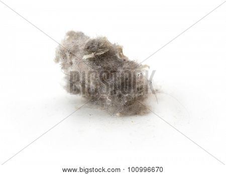 Common house hold dust, high magnification macro, isolated on white. Shallow depth of field.