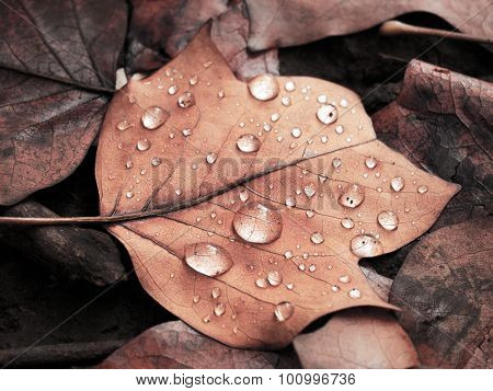 Natural waterproofing.  Autumn rain.