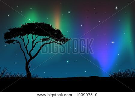 Silhouette field with aurora sky at night	 illustration