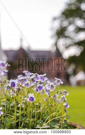 Sofiero Flower Show