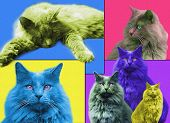 Popart Cats poster