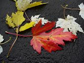 Wet Fallen Leaves