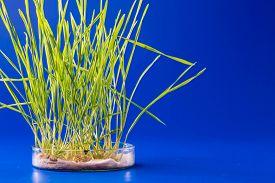 stock photo of modifier  - Genetically modified plants in a scientific laboratory - JPG