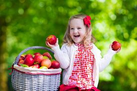 stock photo of orchard  - Child picking apples on a farm in autumn - JPG