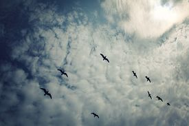 pic of flock seagulls  - Flock of gulls against blue sky - JPG