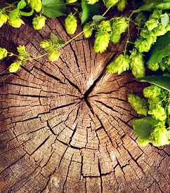 picture of brew  - Fresh green hop branch on cracked wooden background - JPG