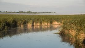 picture of cattail  - A marsh filled with invasive cattail species in central Wisconsin in the early morning hours - JPG
