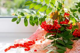 stock photo of mountain-ash  - Autumn view from the window a branch of a mountain ash in glass vase and rowan beads - JPG