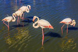 picture of pink flamingos  - Sunset in national park of Kamargue - JPG
