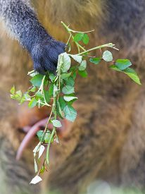 image of wallabies  - Kangaroo - JPG