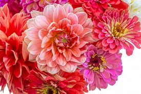 foto of zinnias  - Zinnias and dahlias in a summer bouquet - JPG