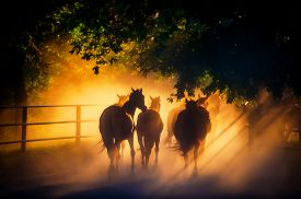 image of horse-riders  - herd of horses back to the pasture in the countryside English horses - JPG