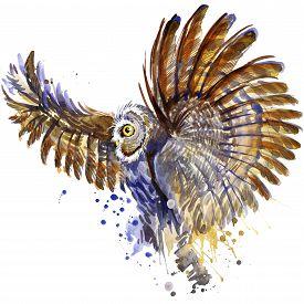 image of owls  - owl T - JPG