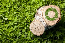 pic of disafforestation  - tree stump on the green grass with recycle symbol - JPG