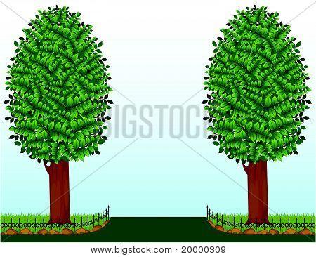 De twee bomen groeien op de grasvelden met het hek
