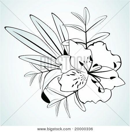 Blumen auf weißem Hintergrund für die Gestaltung von