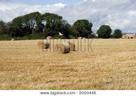 Farm, Hay