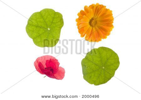 Foursome Of Irish Flowers