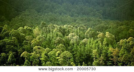 greeen forest