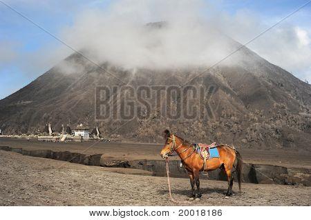 Horse Near The Mountain