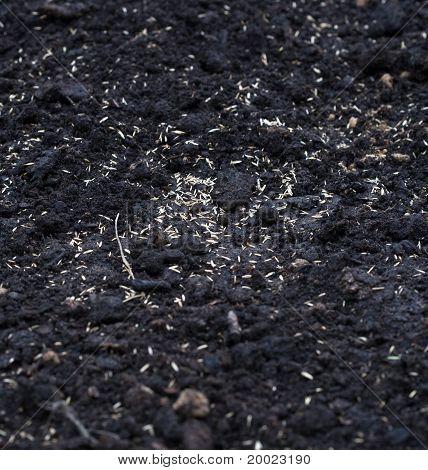 seeds on ground