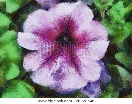 Pastel Drawn Petunia