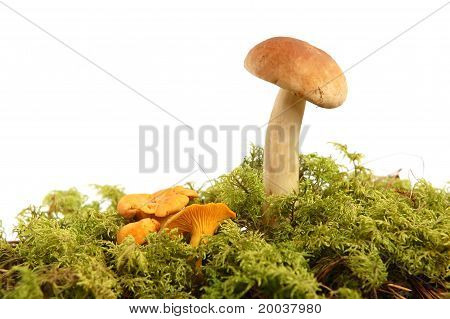 Mushrooms Bunch