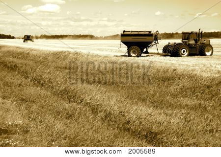 Harvesting Sepia