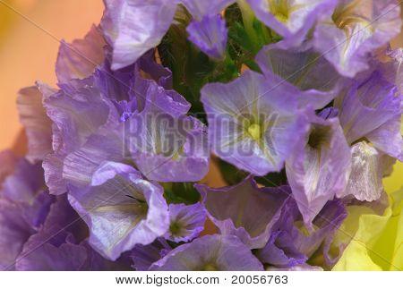 Purple Statice