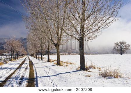Deep Springs Ranch Road In Winter